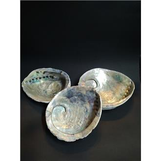 Abalone Smudging Shells